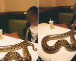 Chủ quán ngất xỉu khi thấy thực khách mang trăn lớn vào nhà hàng