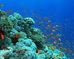 Hồi sinh hệ sinh thái ở đảo San Hô