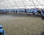 Bàn giải pháp phát triển ngành tôm bền vững