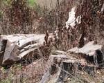 Vụ Phá rừng Khu Bảo tồn thiên nhiên Nam Kar, Đắk Lắk: Kỷ luật 4 cán bộ kiểm lâm