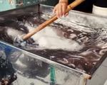 Phát hiện nhiều hóa chất công nghiệp trong quy trình sơ chế bạch tuộc tại chợ hải sản Long Biên
