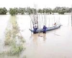 Lũ ở ĐBSCL tăng mạnh do vỡ đập thủy điện ở Lào và triều cường