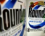 Monsanto phải bồi thường 289 triệu USD vì thuốc diệt cỏ gây ung thư