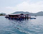 Bỏ ngỏ quản lý bè du lịch tự phát trên vịnh Vũng Rô