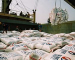 Xuất khẩu gạo cán mốc 4,4 triệu tấn