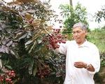 Những lưu ý trong lựa chọn cây giống nhãn tím Sóc Trăng