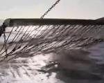 Nghị viện châu Âu nóng trước vấn đề dùng điện đánh cá - ảnh 1