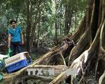 Tăng cường thực thi pháp luật để bảo vệ động vật hoang dã - ảnh 1