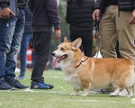 Thú vị cuộc thi sắc đẹp của... những chú chó