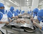 Nhiều tiềm năng xuất khẩu tôm Việt vào EU
