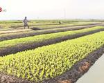Thừa Thiên Huế: Người dân 'ăn nên làm ra' nhờ sản xuất rau trái vụ