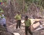 Yêu cầu điều tra nghiêm vụ lâm tặc ngang nhiên mở đường vào phá rừng tại Phú Yên - ảnh 1