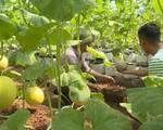 11 tỷ đồng đầu tư xây dựng mô hình sản xuất nông nghiệp công nghệ cao