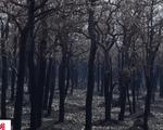 """Rừng Amazon sẽ """"chạm giới hạn không thể đảo ngược"""" vào năm 2021"""