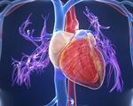Điều tra dịch tễ thông tin 'virus' gây bệnh viêm cơ tim