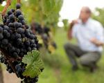 Giới nhập khẩu Mỹ lo ngại thuế đánh vào rượu vang Pháp - ảnh 1