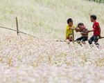 """Khai mạc lễ hội hoa tam giác mạch """"Sắc hồng Cao nguyên đá"""" - ảnh 1"""