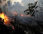 Khí thải từ cháy rừng ở Indonesia tồi tệ hơn Amazon