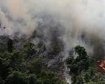 Số vụ cháy tại rừng Amazon giảm kỷ lục trong tháng 10