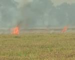 Tái diễn tình trạng đốt rơm rạ tại Ấn Độ