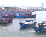 Đà Nẵng hơn 1650 tàu cá đã vào bờ neo đậu an toàn