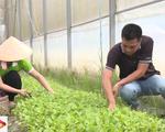 Trải nghiệm nông trại rau sạch từ đồng ruộng đến bàn ăn