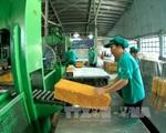 Giá cao su tăng vì thiếu hụt nguồn cung