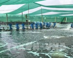 Thủ phủ tôm Bạc Liêu đẩy mạnh nuôi tôm công nghệ cao