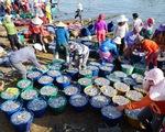 Ngư dân Quảng Bình phấn khởi 'lộc biển' đầu năm