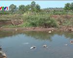 Tây Nguyên đối mặt với tình trạng hạn hán trên diện rộng vào đầu mùa khô