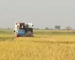 Tín dụng lĩnh vực nông nghiệp tăng