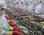 Ngành tôm đặt mục tiêu giá trị xuất khẩu 4,2 tỷ USD