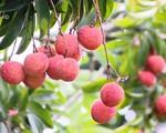 FTA thế hệ mới - Cơ hội xuất khẩu nông sản Việt Nam