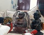 Biến tướng trào lưu nuôi Kumanthong