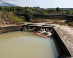 Phát hiện nhiều xác lợn chết ở dưới hồ nước tại Khánh Hòa