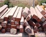 Mục sở thị lô gỗ 'khủng' tại Cảng Bình Long