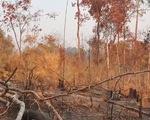 Phát hiện vụ phá rừng lớn tại Gia Lai