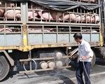 Dịch tả lợn châu Phi: Hà Nội hỗ trợ nông dân thiệt hại cao hơn 1,8 lần giá thị trường