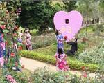 Khám phá vườn hoa hồng lớn nhất Việt Nam
