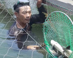 Quảng Ngãi yêu cầu chấm dứt nuôi cá lồng bè tự phát ở khu vực biển và sông Trà Bồng