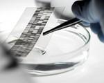 Cặp sinh đôi người Brazil cùng trả trợ cấp nuôi con do không xác định được ADN