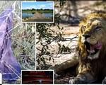 Nam Phi: Kẻ săn trộm động vật hoang dã bị voi giày chết, sư tử ăn thịt
