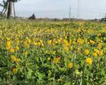 Đường làng rực rỡ sắc hoa - ảnh 1