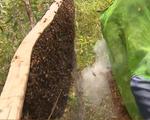 Mật ong rừng tràm - Đặc sản thiên nhiên trời phú tại Cà Mau
