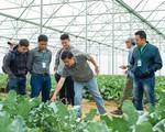 Liên kết chuỗi cung cấp giải pháp giúp nông dân sản xuất sạch
