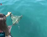 Thả hàng nghìn con cá giống tái tạo nguồn lợi thủy sản tại Hà Nội - ảnh 1