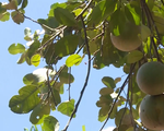 Thừa Thiên - Huế hỗ trợ phát triển 16 sản phẩm chủ lực địa phương