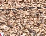 Điệp khúc cá chết lặp lại trên sông La Ngà, người dân treo biển bán bè