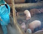 Xuất hiện 2 ổ dịch tả lợn châu Phi tại Bình Dương