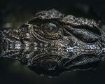 Cá sấu tiền sử khủng dài tới 7 m từng sống tại Australia - ảnh 2